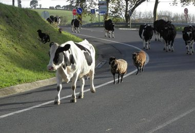 automobiliste ou vache à lait ?